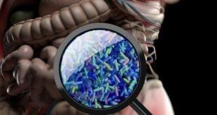 باکتریهای روده تاثیر درمان سرطان را 'بیشتر' میکند