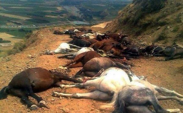 زخمی شدن یک کولبر و کشتار ٢٠٠ راس اسب در پیرانشهر و اشنویە