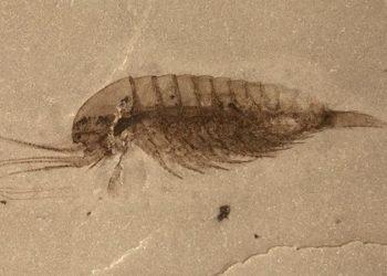 یک مجموعه عظیم از فسیل نرمتنان در چین کشف شد