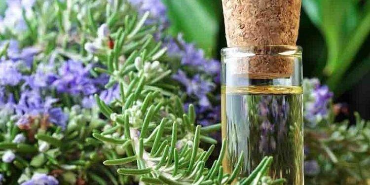 کشف گیاهی که با زوال عقل میجنگد و حافظه را تا ۷۵ درصد افزایش میدهد