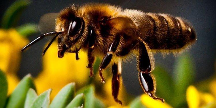 کارآگاه زنبور