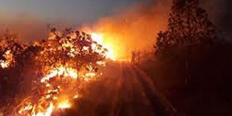ریههای کره زمین (جنگلهای آمازون) در آتش میسوزد