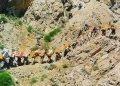 قتل یک کولبر جوان در مرز بروشکانی با شلیک مستقیم نیروهای نظامی
