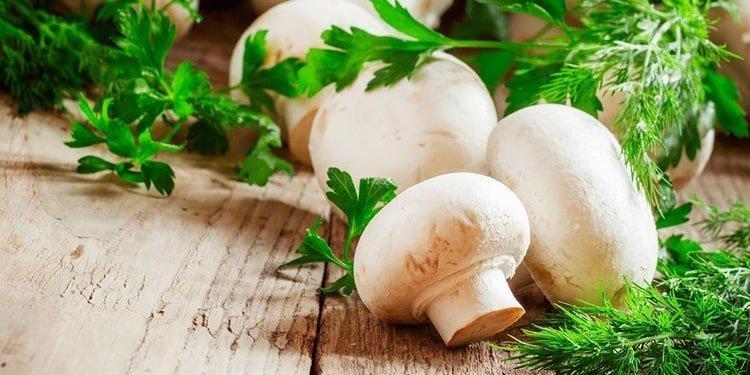ارزش پروتئینی قارچ